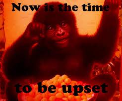 Gorilla Munch Meme - wtf gorilla munch