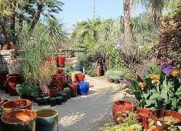 what are the best places to buy plants and trees in san francisco
