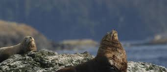 Washington wildlife tours images San juan excursions san juan islands whale watching whale jpg