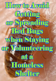 How To Avoid Bed Bugs How To Avoid Getting Bed Bugs From Homeless Shelters Hubpages