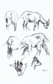 210 best animals images on pinterest animal drawings animal