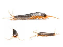 ungeziefer küche silberfische im bad und in der wohnung was hilft