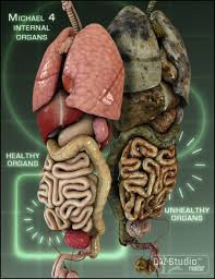 Pictures Of The Human Body Internal Organs Michael 4 Internal Organs 3d Models And 3d Software By Daz 3d