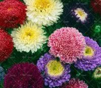 List Of Tropical Plants Names - carnivorous plants for sale home depot names list beautiful