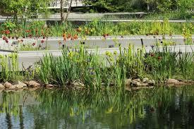lewis ginter botanical gardens natch greyes u0027 carnivorous plants