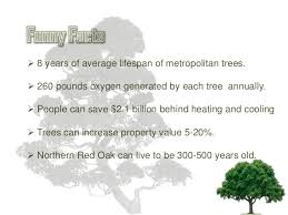 to some facts about trees