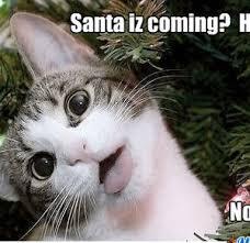 Cat Christmas Memes - christmas cat by fluttershy meme center