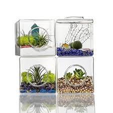 2x terrarium glass potting container flower air plant soil home