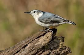 top ten birds that winter in canada earth rangers wild wire blog