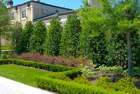 Small Backyard Landscaping Ideas For Privacy Best Privacy Trees Hedges U0026 Shrubs With Landscaping Ide