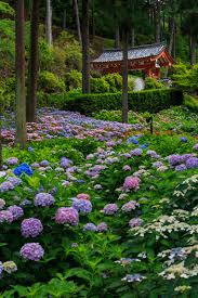 japanese flower garden and their colorful landscape
