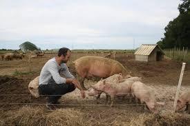 chambre d agriculture du roussillon visite des grains de blé bio aux pots de rillettes de porc bio