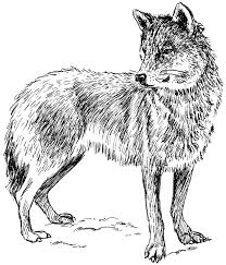 wolf head coloring pages coloringstar