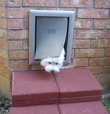 cat doors for glass doors cat door google search cat doors pinterest