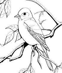 bird coloring pages for toddlers free bird coloring pages free online angry bird coloring pages birds