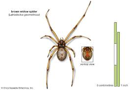 9 of the world u0027s deadliest spiders britannica com