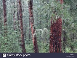 South Dakota forest images Black hills national forest stock photos black hills national jpg