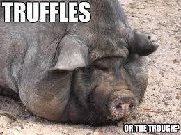 Funny Pig Memes - fat pig memes quickmeme