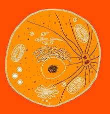 how to draw an animal cell the ultimate guide