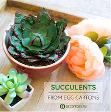 kids crafts make an egg celent succulent with cartons secondsguru