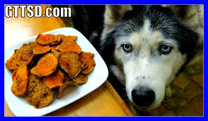 Diy Dog And Cat Treats by Diy Sweet Potato Dog Treats Snow Dogs Snacks 39 Gluten Free