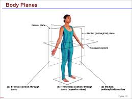 body planes worksheet worksheets