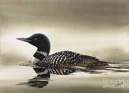 loon paintings america