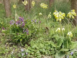 Kies Garten Gelb Violett Und Gelb Als Etwas Gewagte Farbkombination Von Frühlings