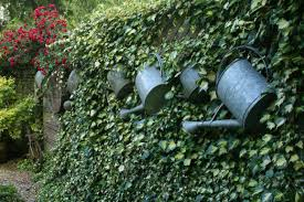 watering cans as garden ornaments finegardening