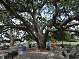 file neptune park tree st simons jpg wikimedia commons