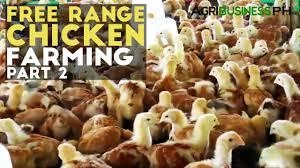 free range chicken farming part 2 free range chicken