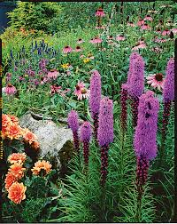 how to grow a cottage garden sunset