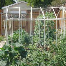 growing your own vegetables in a backyard garden yard and garden