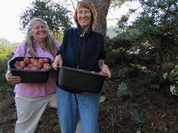 san diego county native plants native foods make a comeback in southwest fronteras desk