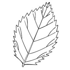 coloring pages of leaf shapes free printable leaf coloring pages best of leaves atomicrocket co