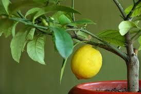 apartment gardening ideas creating a fruit vegetable u0026 herb