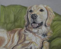 golden retriever custom dog drawing from picture custom pet