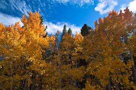 hein natural history photography eastern sierra fall colors