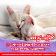 imagenes de amor y amistad para compartir por wasap 20 imágenes de amistad con frases lindas para compartir imágenes