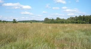 brachfläche panoramio photo of brachfläche vorm wittmoor in westervesede