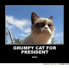 Funny Grumpy Cat Memes - grumpy cat for president 2016 memes funny pics frabzcom cats