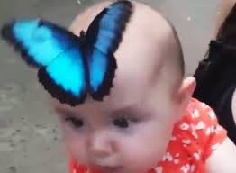 butterfly on a baby s ento nation