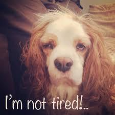 Tired Dog Meme - jamie leadbeatter on twitter tired dog puppy memes meme