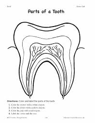 parts of a tooth worksheet click here parts of a tooth pdf to
