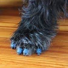 294 best pawsome pet products images on stuff