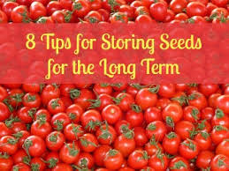 8 tips for storing seeds for the long term backdoor survival