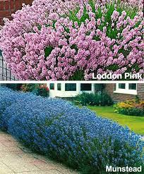 Flowering Patio Plants 35 Best Home Patio Plants Images On Pinterest Patio Plants