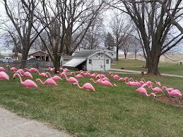 plastic pink flamingos rental iowa city cedar rapids ia