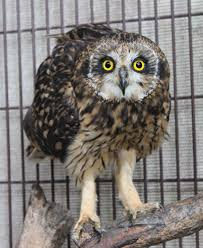 owl item adopt an owl three ring ranch store