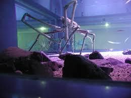 osaka aquarium kaiyukan a must see in japan places boomsbeat